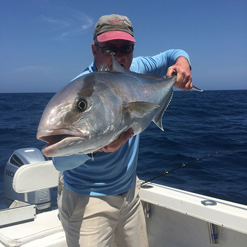 Aggressive Amberjack Hooked on Crabby's Cape Coral Charter