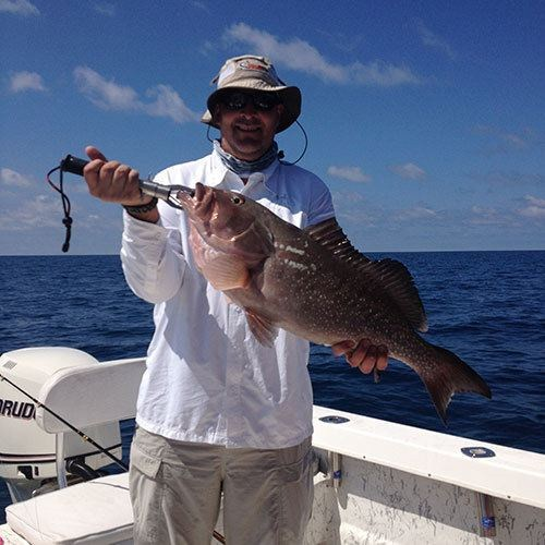 Another Big Red Grouper Caught on a Ft Myers Deep Sea Charter