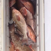 Coming Home with a Cooler of Snapper and Grouper