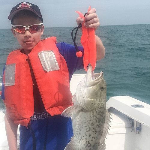 Young Gag Grouper Caught on Ft Myers Deep Sea Fishing Charter