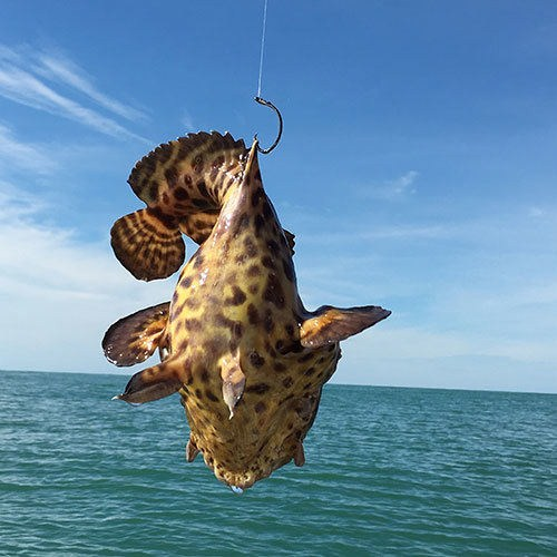 Batfish Caught on Ft Myers Deep Sea Fishing Charter