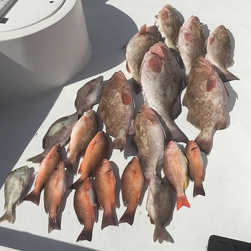 Gulf Coast Grouper Two Man Bag Limit