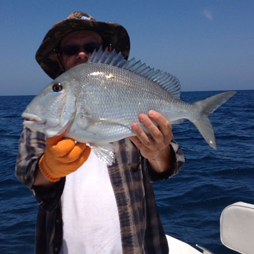 Monstrous Porgy Caught on Ft Myers Deep Sea Fishing Charter