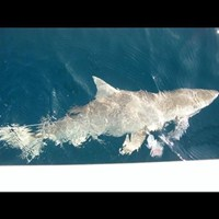 Blacktip Shark Fishing Off the Coast of Ft Myers