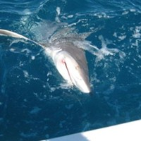 Best Shark Fishing Off the Coast of Cape Coral