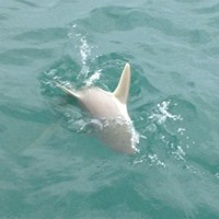 Deep Sea Shark Fishing Charter in Ft Myers