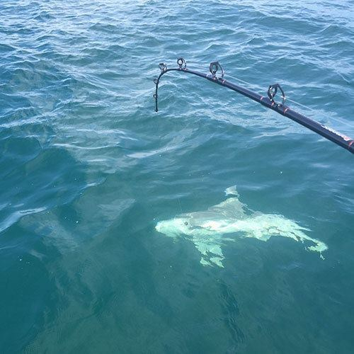 Ft Myers Shark Fishing Charter