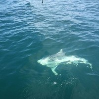 Cape Coral Shark Fishing Charter