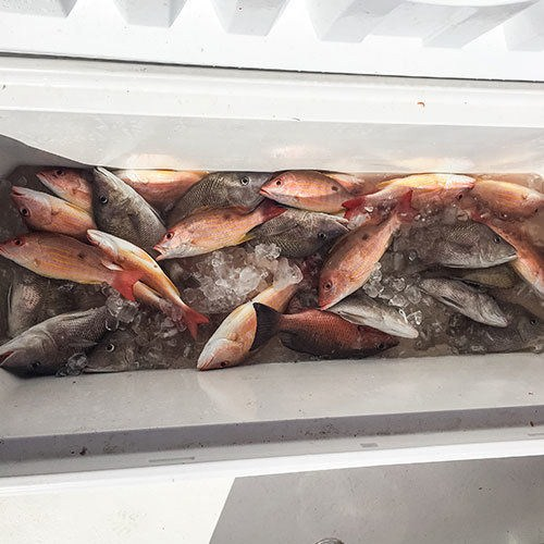 Box of Snapper After Cape Coral Deep Sea Fishing Charter