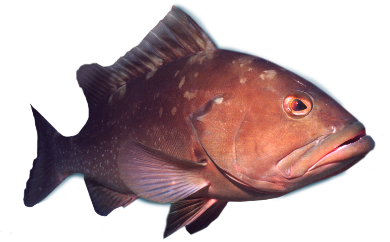 Deep sea grouper fishing charters